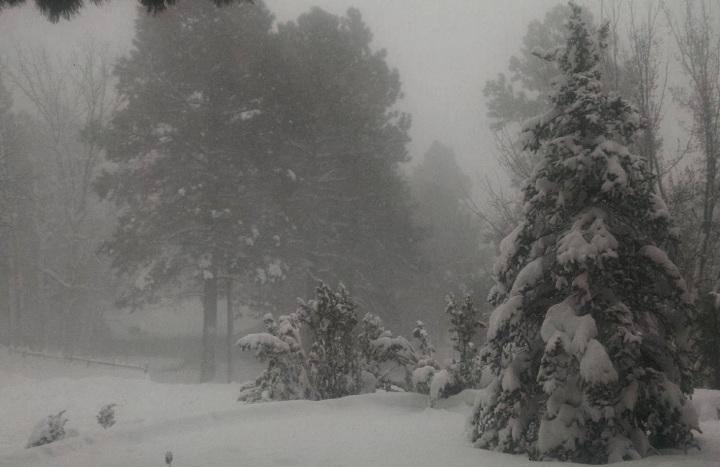 snow-celebration-1-21-17