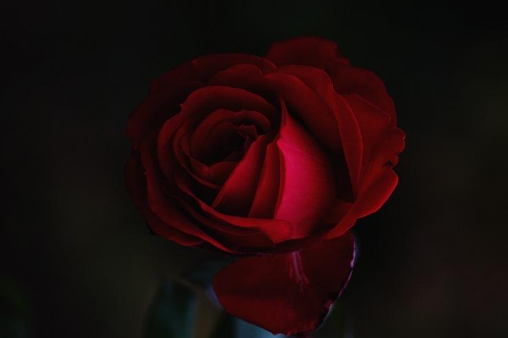roksolana-zasiadko ROSE