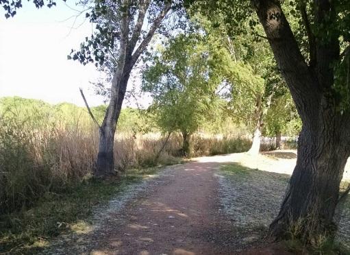 cottonwoods2