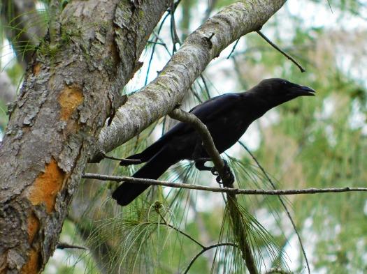 crow-2057872_1280